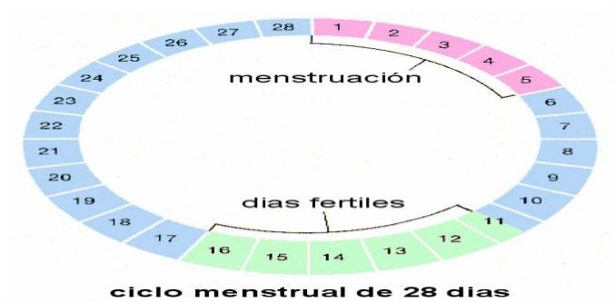 Calcular dias fertiles